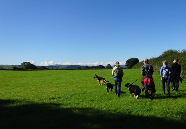4 walkers, with dogs on lead, walking across a green field. Big blue open sky ahead.